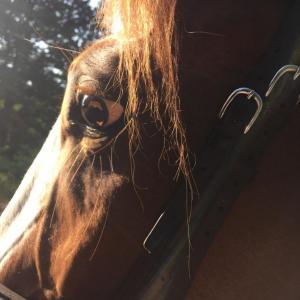 SRR paard en ruiter